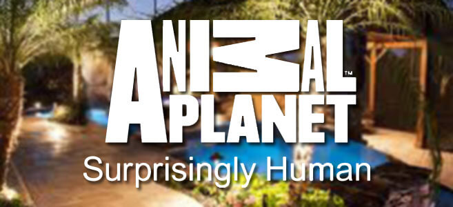 Animal Planet - Pool
